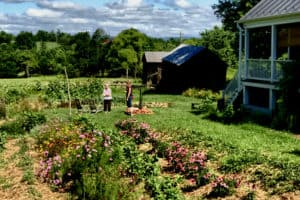 Food garden today in Waterford VA
